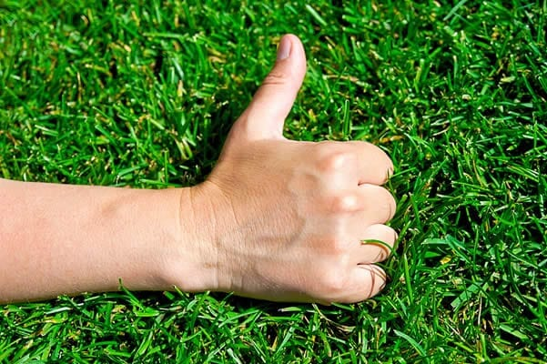 Thumbs up in front of green lawn