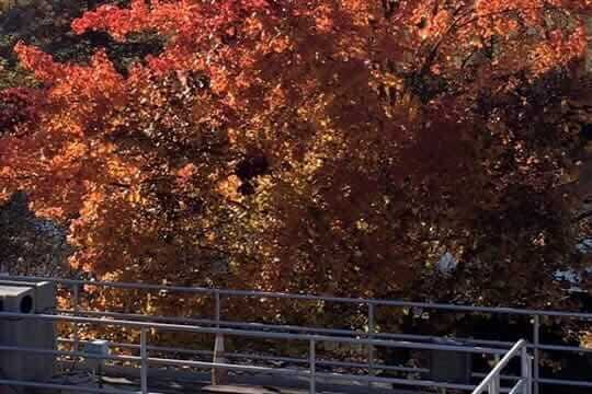 South Berwick Sewer District treatment plant in autumn
