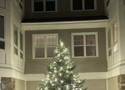 Riverwoods tree lighting