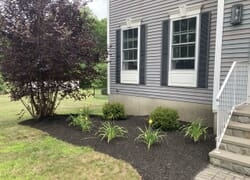 Planting bed showing Japanese Maple Tree